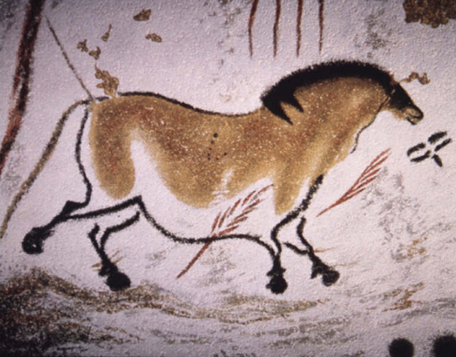 Lascaux Cave Paintings - horse